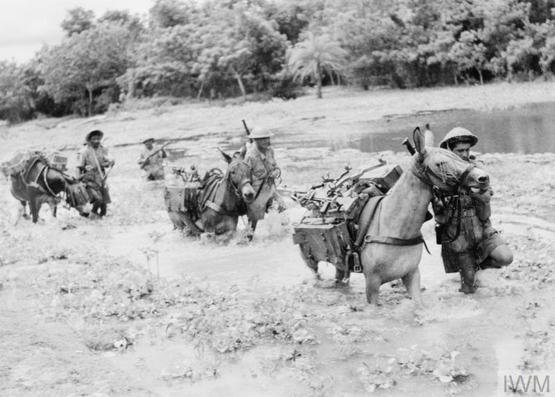 A mule convoy carrying supplies into Burma.