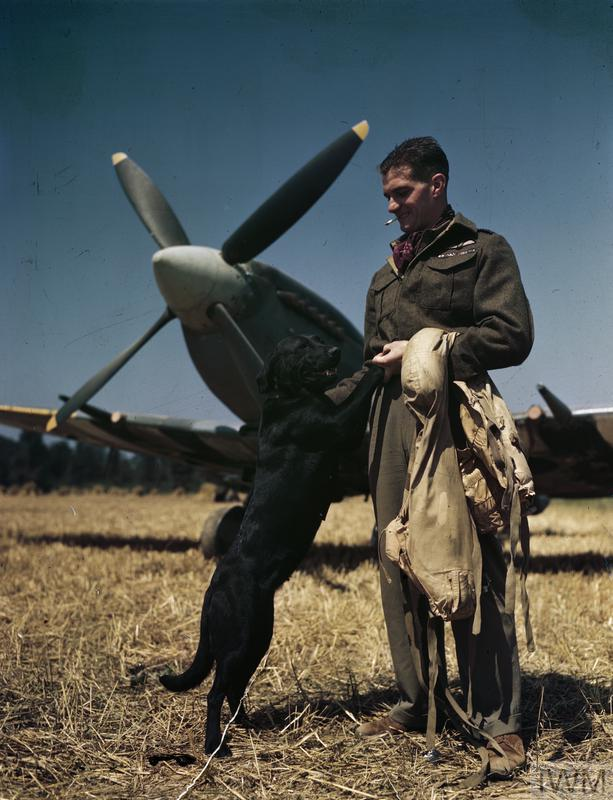 The RAF's top scoring fighter pilot flying in north west Europe, Wing Commander Johnny Johnson, seen with his pet Labrador dog 'Sally'. He recorded 38 victories, though at the time of the photograph his total was 35. He commanded No 127 Wing composed of three Canadian Spitfire squadrons. The decorations on his tunic are a DSO with two Bars and a DFC with one Bar.