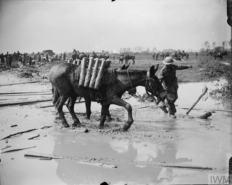 Battle of Pilckem Ridge. Shell-carrying pack mules moving forward through the mud. Note a railway line in the background. Near Ypres, 1 August 1917.