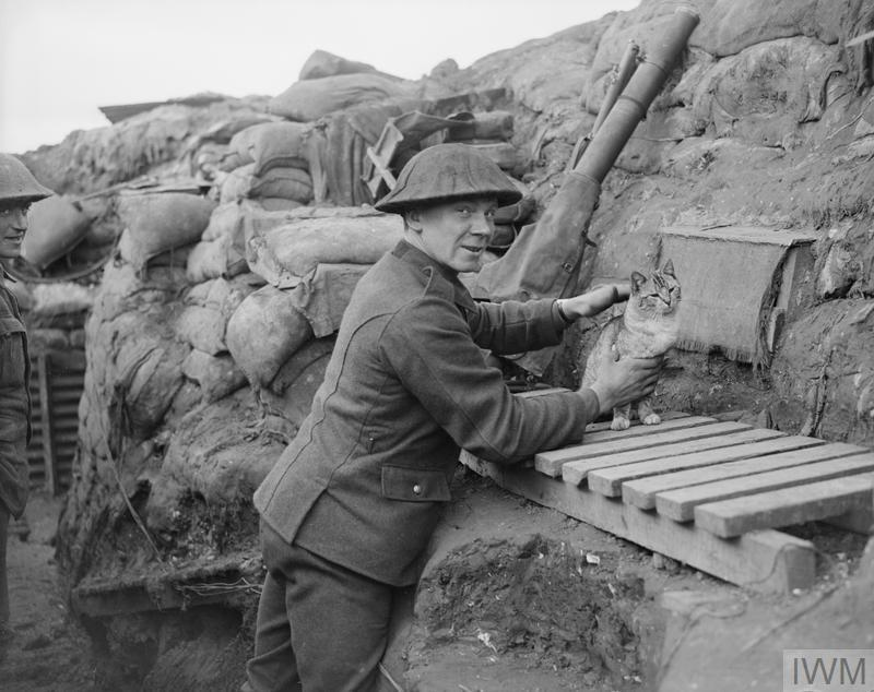 A Lewis gunner of the 6th Battalion, the York and Lancaster Regiment with the Regiment's cat mascot, in a trench near Cambrin, 6 February 1918.