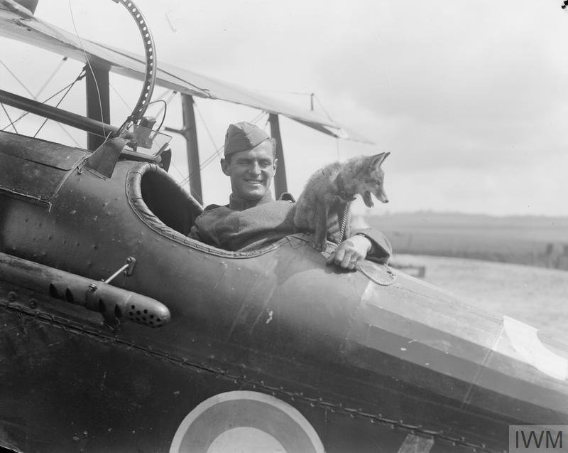 A fox cub sits on the fuselage of a bi-plane fighter, the pilot sits in his seat smiling.
