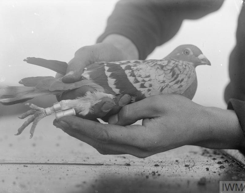 A method of fixing a message to a homing pigeon for communication.