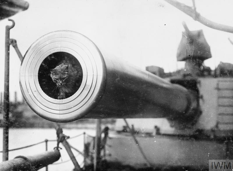 A cat inside the barrel of a naval gun. The cat is Togo, mascot of HMS Dreadnought.