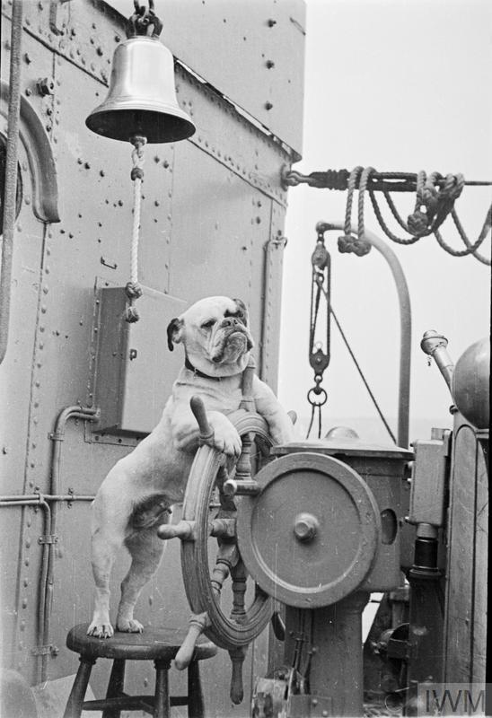 Venus, the bulldog at the wheel of HMS VANSITTART.