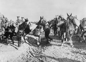 An Indian muleteer having trouble with his team of pack mules, Salonika, 1916. THE MACEDONIAN CAMPAIGN, 1915-1918