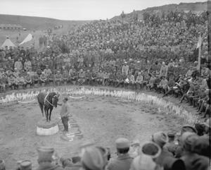 A horse and trainer perform at a circus arranged by the French Regiment de Marche d'Afrique at Salonika, February 1916. THE MACEDONIAN CAMPAIGN, 1915-1918