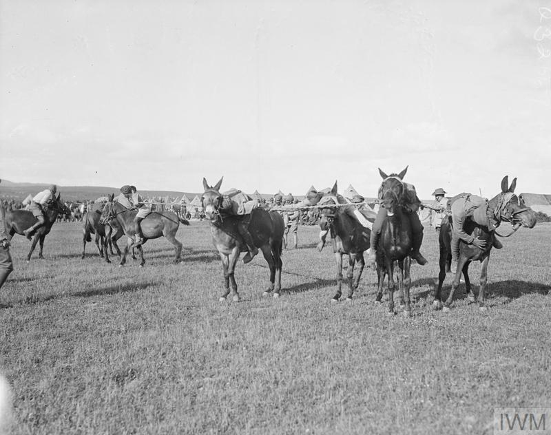 A tug of war between Indian troops mounted on mules.