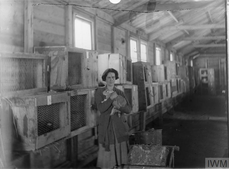 Miss Hall rabbit-keeping at the farm at Grange-le-Comte. (See Q8079)