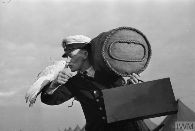 ANIMALS AT WAR: MOVING DAY AT HMS GOLDEN HIND, SYDNEY, AUSTRALIA, 10 JULY 1945