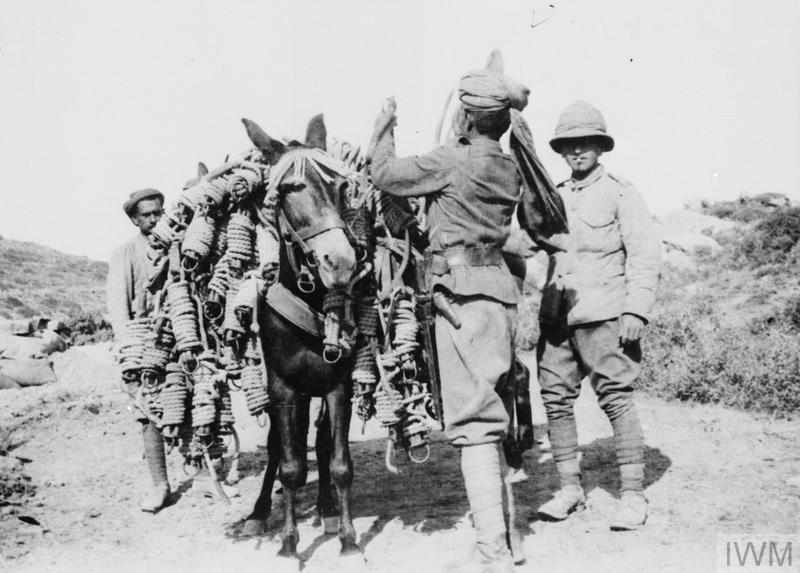 Indian driver loading a pack mule, Gallipoli, 1915.