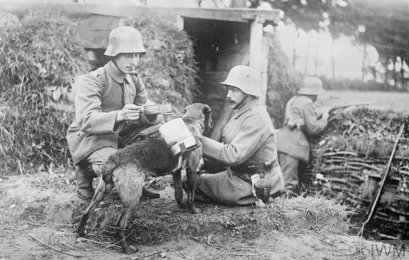 A despatch dog brings food to two German soldiers in an advanced trench, somewhere on the Western Front. The dog is wearing a special harness on its back which can hold mess tins. In the background, a third soldier can be seen pointing his rifle over the top of the trench.