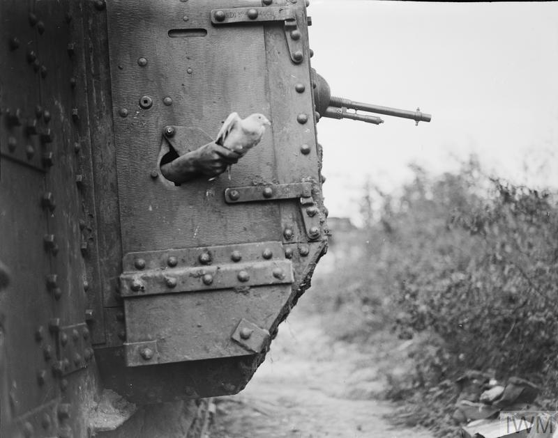 A carrier pigeon being released from a port-hole in the side of a tank near Albert, 9 August 1918. It's a Mark V tank of the 10th Battalion, Tank Corps attached to the III Corps during the Battle of Amiens.