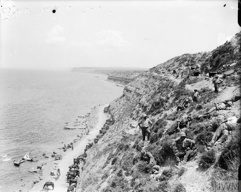 Horses picketed on the beach road made between Cape Helles and Gully Ravine.