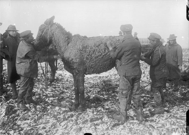 British troops scrape mud from a mule on the Western Front