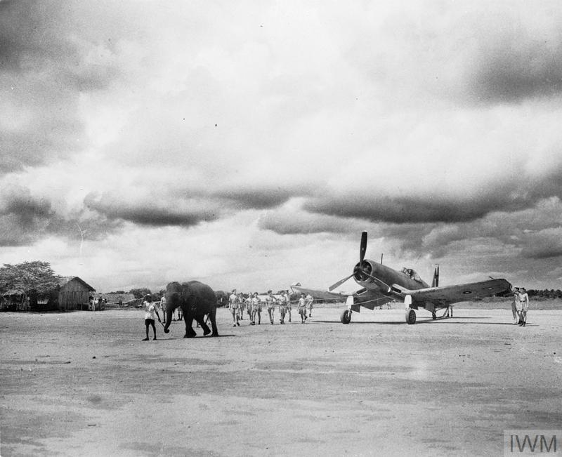 An elephant pulls a Chance Vought Corsair into position on a Fleet Air Arm airfield in India. The skill and strength of the elephant in manoeuvring large objects was particularly useful in the Far East where there were few good roads.