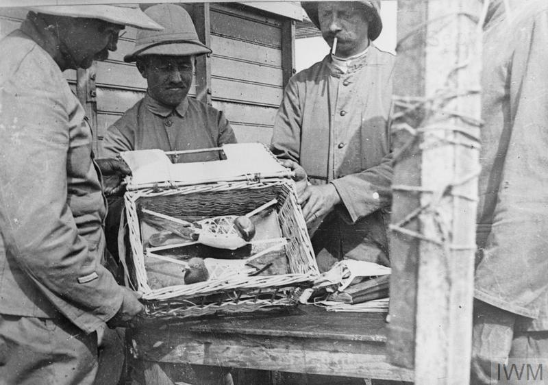 Carrier pigeons: French troops with two carrier pigeons strapped in their travelling basket.