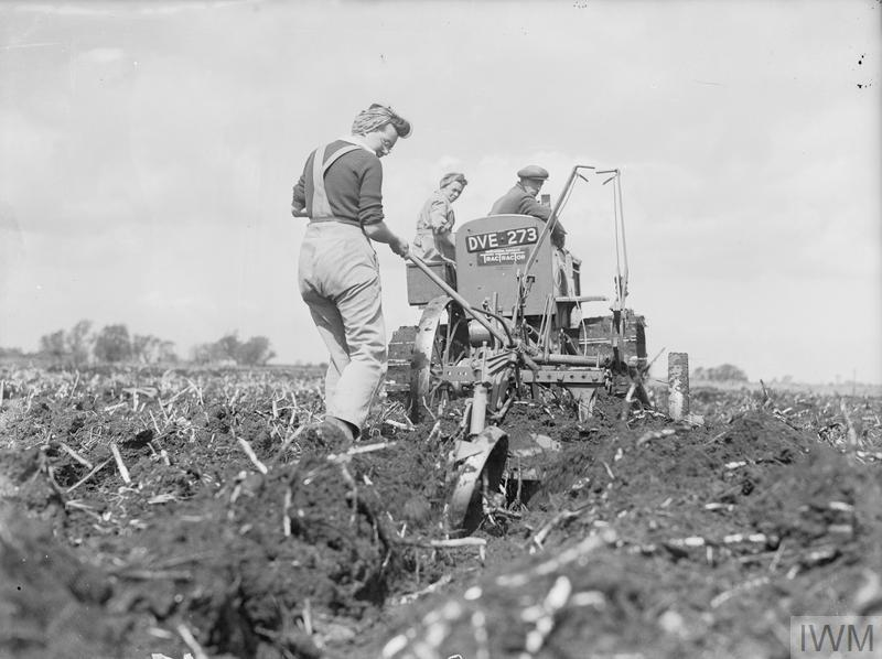 Members of the WLA help a farmer to plough reclaimed fenland in Cambridgeshire. The deep digger plough and International tractor being used are ploughing 15 inches deep.