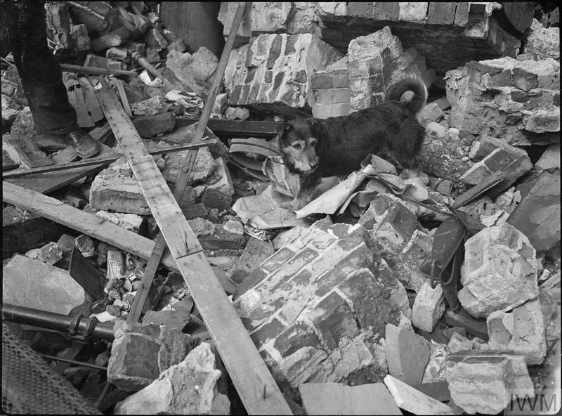 Rip searches the rubble for survivors after an air raid in Poplar, east London, 5 August 1941.