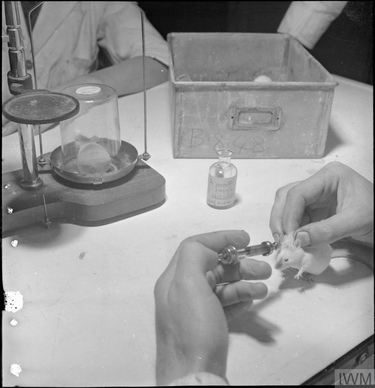 the discover and research of penicillin