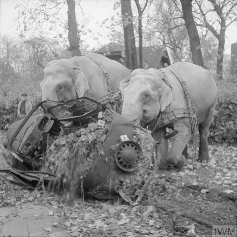 Circus elephants Kiri and Many moving a wrecked car from a bombed out garage in Hamburg.