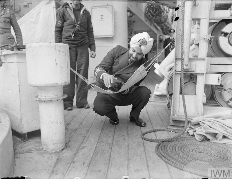 The ship's mascot, a Persian kitten, finds a quiet spot in a special hammock.
