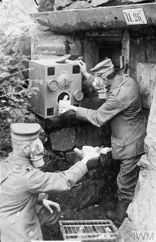 German soldiers wear gas masks as they place carrier pigeons into a gas-proof chamber, presumably during an anti-gas drill.