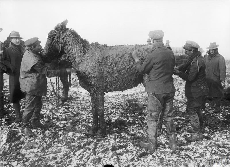 British troops scraping mud from a mule near Bernafay Wood on the Western Front, November 1916.