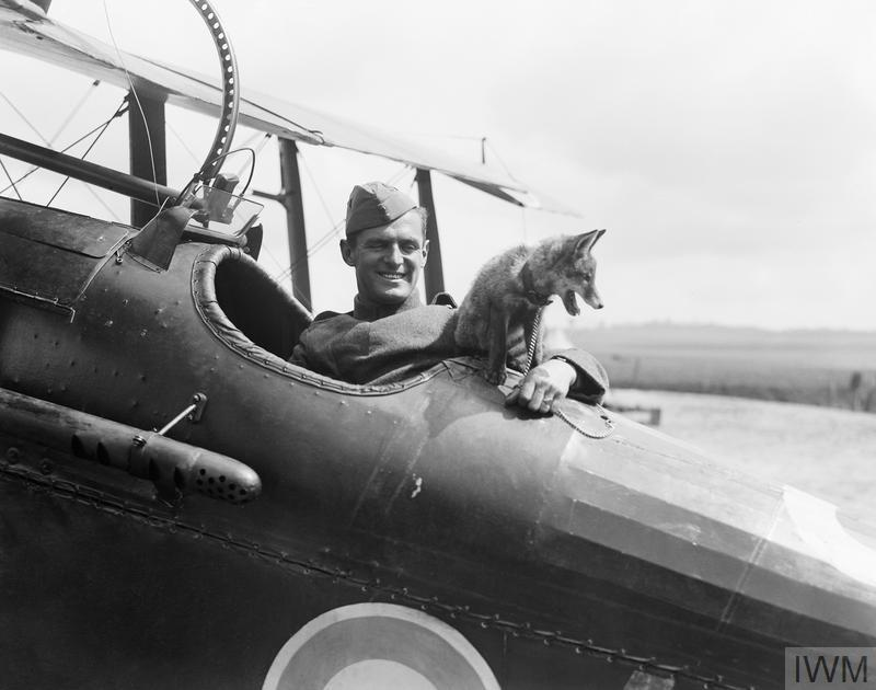 Fox cub mascot of No. 32 Squadron at Humieres Aerodrome, St. Pol, France, 5 May 2928