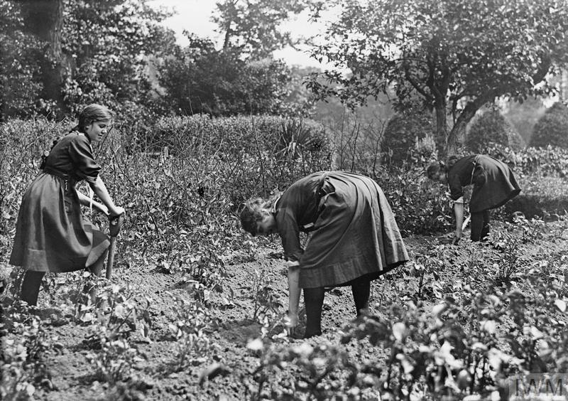 Girl Guides tending to an allotment.