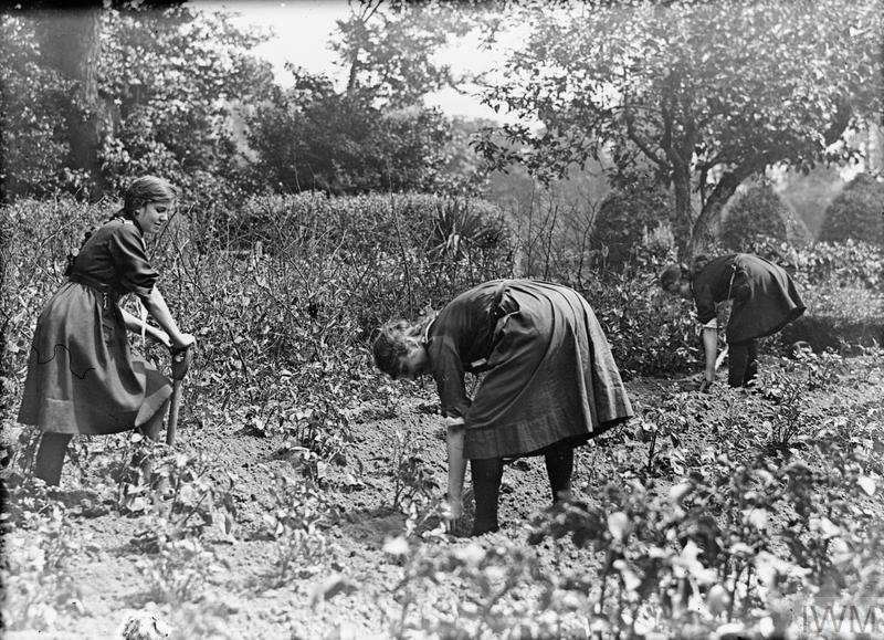 Girl Guides tend to an allotment in the United Kingdom during the First World War.