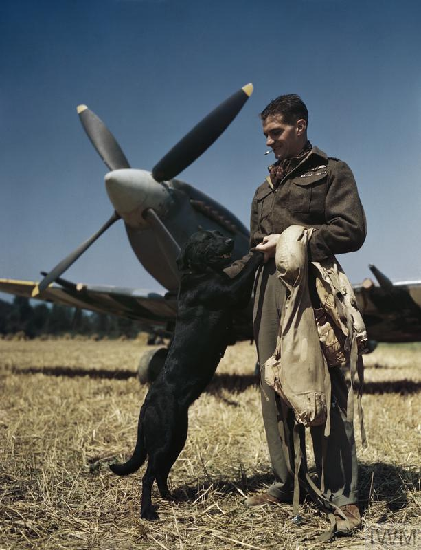 The RAF's top scoring fighter pilot flying in north west Europe, Wing Commander Johnny Johnson, seen with his pet Labrador dog 'Sally'.