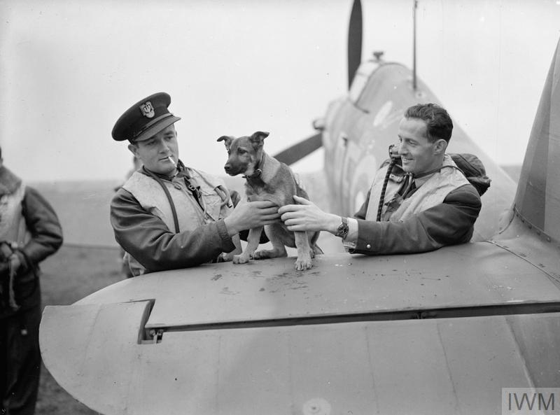 "Pilot Officers Jan ""Donald Duck"" Zumbach (left) and Mirosław ""Ox"" Ferić playing with the Squadron's mascot"