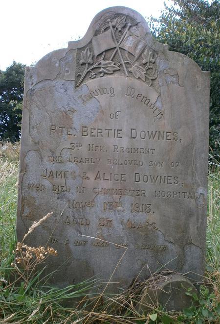 Profile picture for Bertie Downes