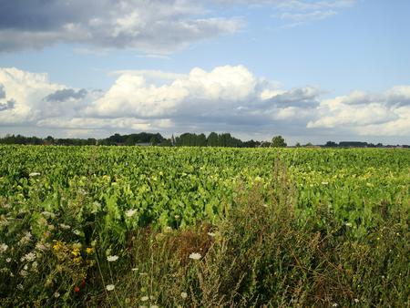 The fields between Le Pilly and Le Riez