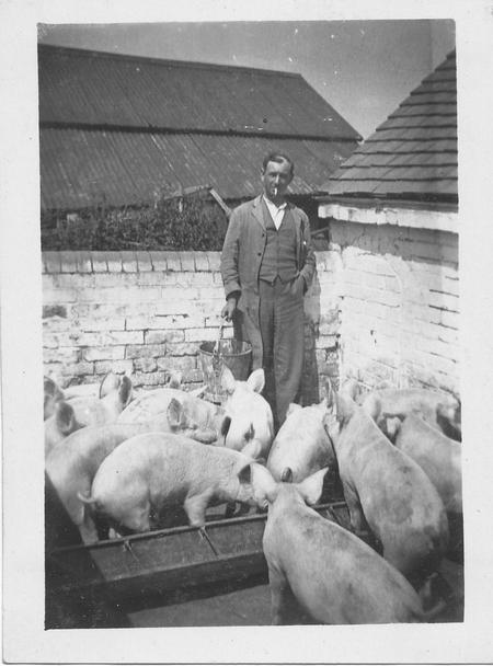 Bob Greenhill feeding the pigs